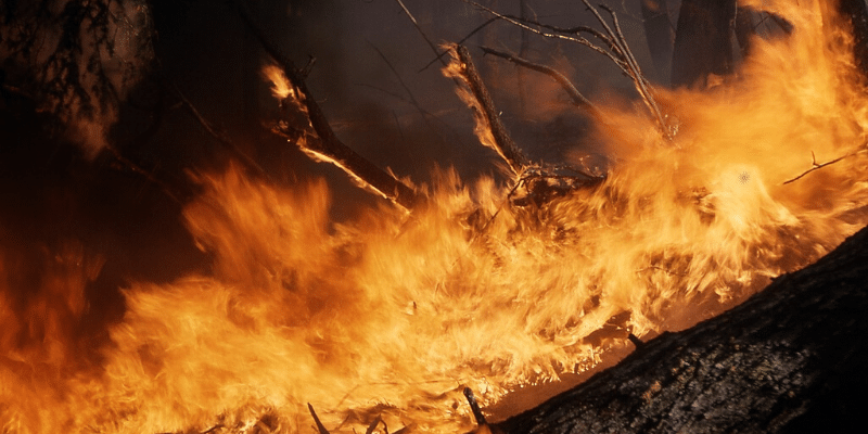 How Wildfire Season Impacts Businesses